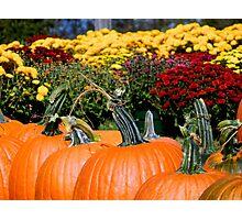 Pumpkin Patch - Close Up  ^ Photographic Print