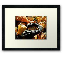 Autumn Gourds   ^ Framed Print