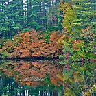 Autumn reflection 2 by Carolyn Clark