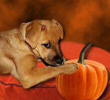 I CAN'T WAIT UNTIL MOM MAKES ME SOME PUMPKIN BISCUITS>>CANINE DOG PICTURE AND OR CARD by ✿✿ Bonita ✿✿ ђєℓℓσ