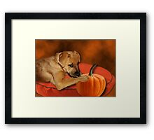 I CAN'T WAIT UNTIL MOM MAKES ME SOME PUMPKIN BISCUITS>>CANINE DOG PICTURE AND OR CARD Framed Print