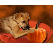 I CAN'T WAIT UNTIL MOM MAKES ME SOME PUMPKIN BISCUITS>>CANINE DOG PICTURE AND OR CARD Photographic Print