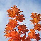 Orange Autumn Fall Tree LEAVES Blue Sky Art Prints by BasleeArtPrints