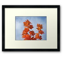 Orange Autumn Fall Tree LEAVES Blue Sky Art Prints Framed Print