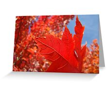 RED Fall Tree LEAVES Art PRINTS Canvas Autumn Greeting Card