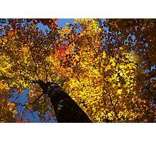 Hot Autumn Palette Photographic Print