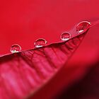 more droplets by ANNABEL   S. ALENTON