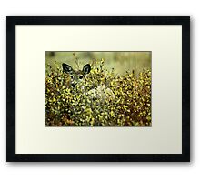 Deer in brush Framed Print