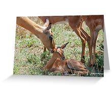 LOVE YOU BABY -  IMPALA  - Aepyceros melampus petersi Greeting Card