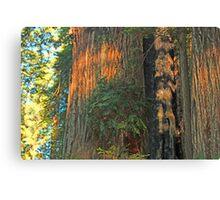Giants in Califorina Canvas Print