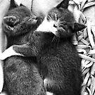 Russian Blue X Kittens by Anne Staub