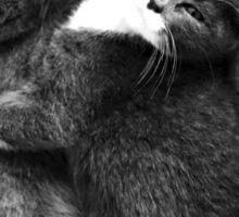 Russian Blue X Kittens Sticker