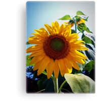 Smiling in the Sun Canvas Print