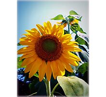 Smiling in the Sun Photographic Print
