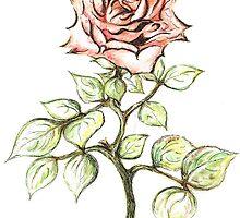 Pink Rose by Teresa White