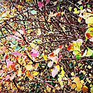 Neon Autumn by Ms-Bexy