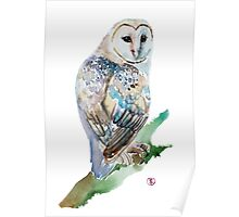 Beautiful Owl  Poster