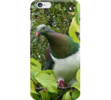 Native Wood Pigeon.......Kereru........! iPhone Case/Skin