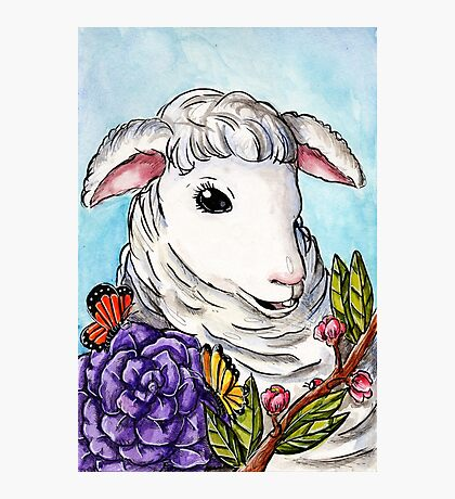 Lamb of Spring Photographic Print
