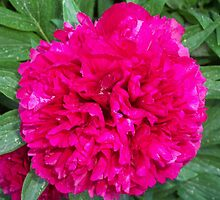 Grandmother's Peonies SDL by sherrie-larch