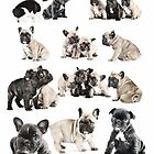 Frenchie Favourites by Andrew Bret Wallis
