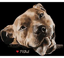 Pit Bull - LOVE :) Photographic Print