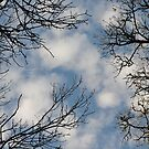 """"""" Beneath Wintered Trees """" by Richard Couchman"""