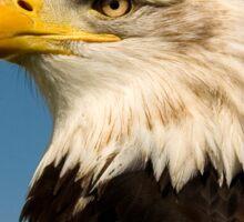 Arrogant Eagle Sticker