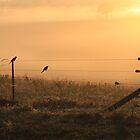 Sunrise Silhouettes  by Jenelle  Irvine