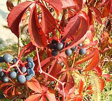 Red autumn by Ana Belaj