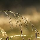 After the rain by Jenelle  Irvine