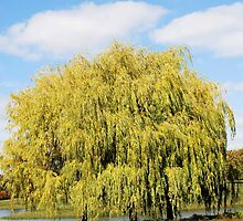 Weeping Willows in Autumn by Kathleen Brant