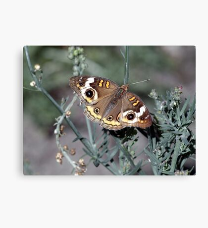 the MOTHman Canvas Print