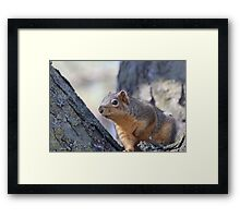 Fast and Furriest Framed Print