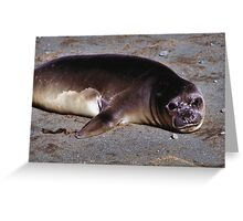 Southern Elephant Seal Pup, Macquarie Island  Greeting Card