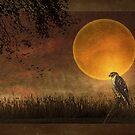 Heartland Harvest by TOM YORK
