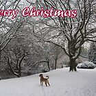 Merry Christmas - dog 01 by Peter Barrett