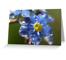 Forget Me Not? Greeting Card