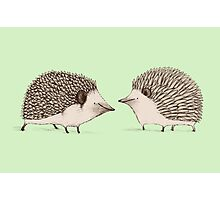 Two Hedgehogs Photographic Print