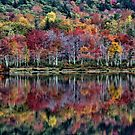 Tapestry of Fall Colors - Basin Pond by T.J. Martin
