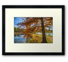 USA. Washington D.C.. Kenilworth Park and Aquatic Gardens. Tree. Framed Print