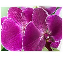 Joyful Purple Flowers Poster