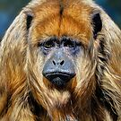 Female Howler Monkey by Savannah Gibbs
