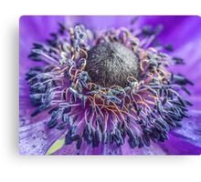 Macro Purple Flower Canvas Print