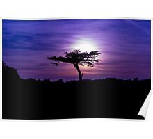 Sunset behind a tree Poster