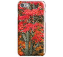 MAPLE TREE,AUTUMN iPhone Case/Skin