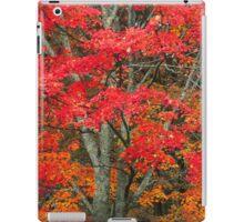 MAPLE TREE,AUTUMN iPad Case/Skin