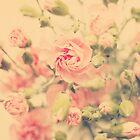 carnation pink by Ingz