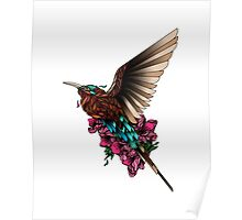 Carmine Bee Eater Poster