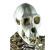 Chimpanzee skull Photographic Print
